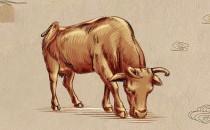 属牛的五行属什么