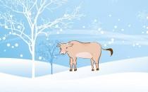 十月、十一月、十二月冬天生属牛人的财运