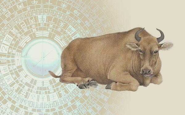 属牛人需注意的风水禁忌