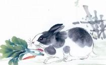 属兔人的性格和脾气