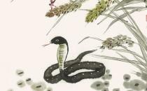 属蛇人的性格和脾气