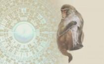 属猴人需注意的风水禁忌