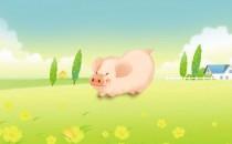 正月、二月、三月春天生属猪人的财运