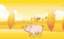 七月、八月、九月秋天生属猪人的财运